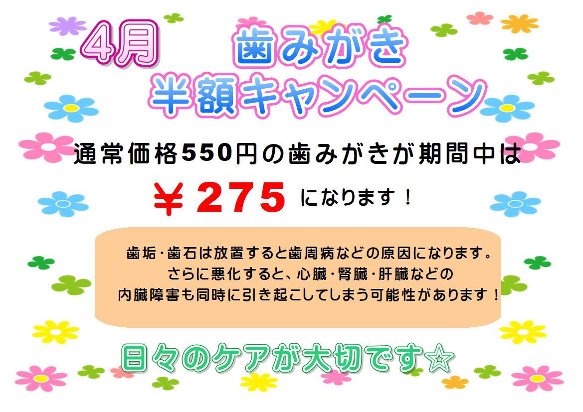 4月★歯みがき半額キャンペーン
