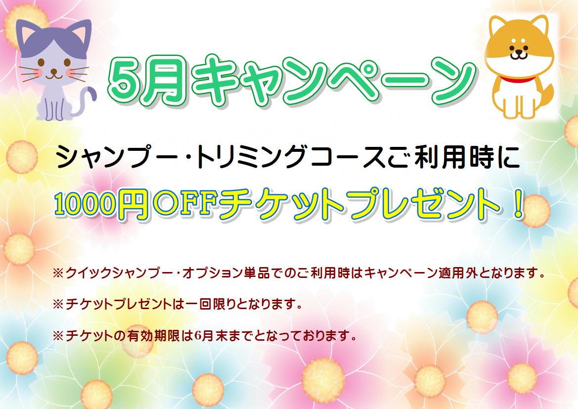 5月★1000円OFFチケットプレゼントキャンペーン