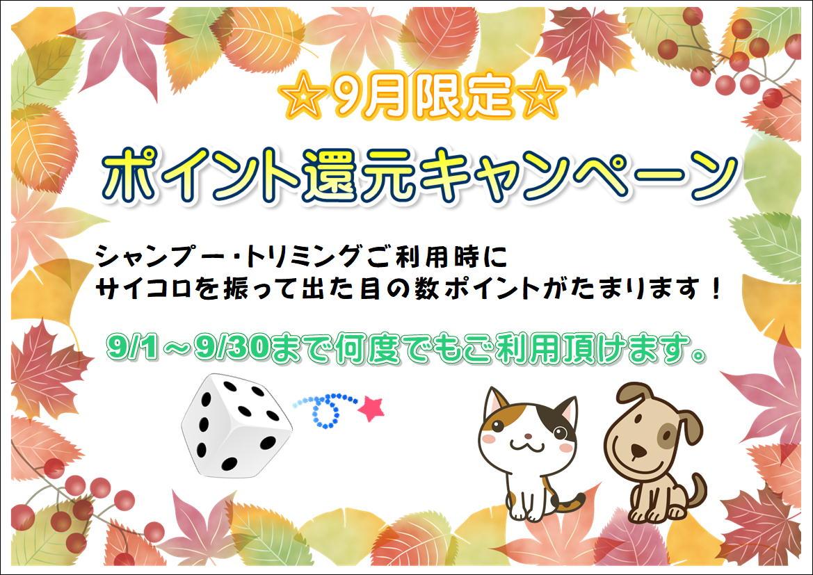 9月★ポイント還元キャンペーン