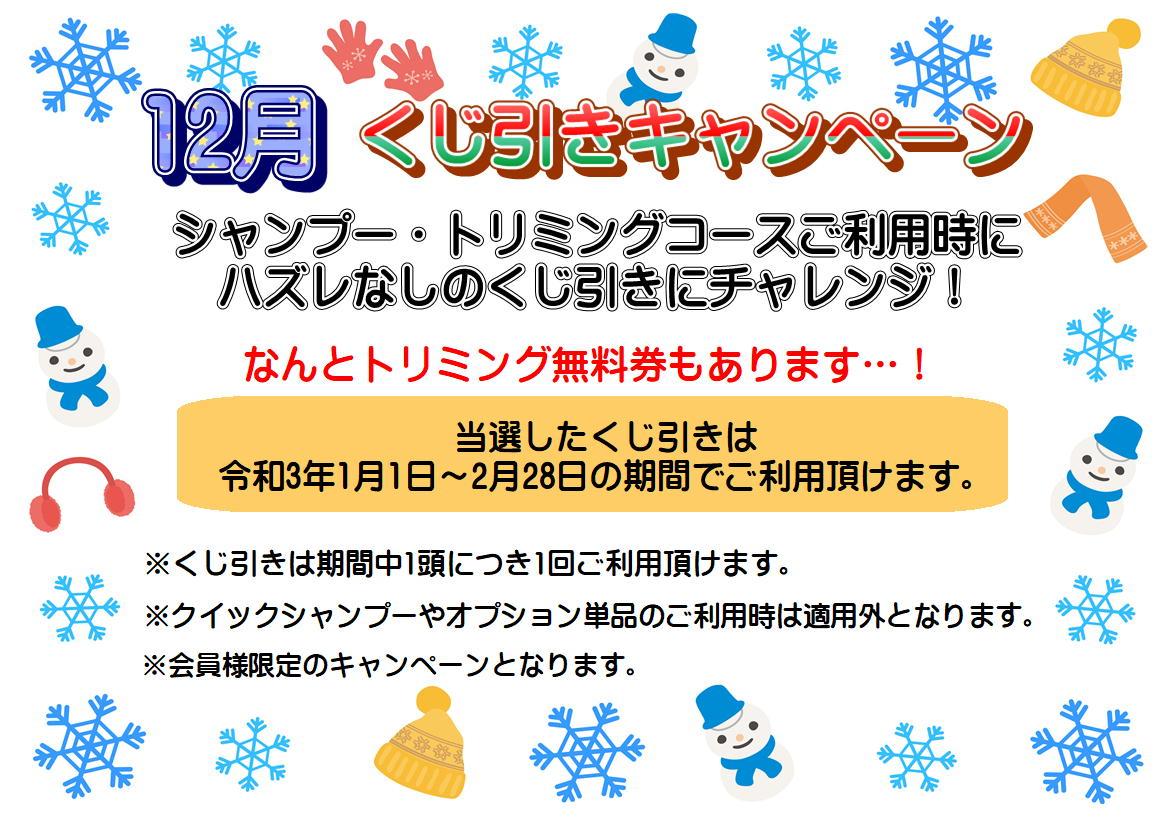 12月★くじ引きキャンペーン